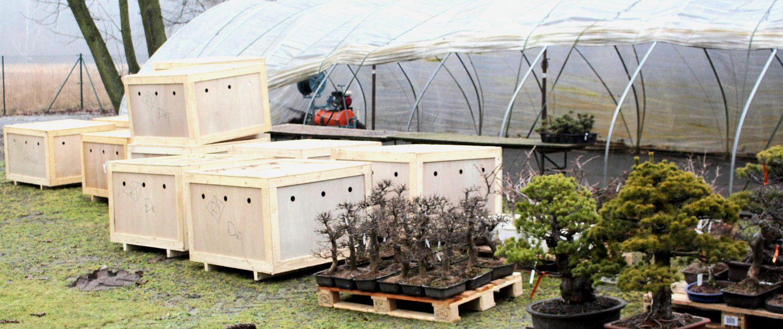 Entpackter Container, die meisten Bonsai sind noch in den Holzkisten