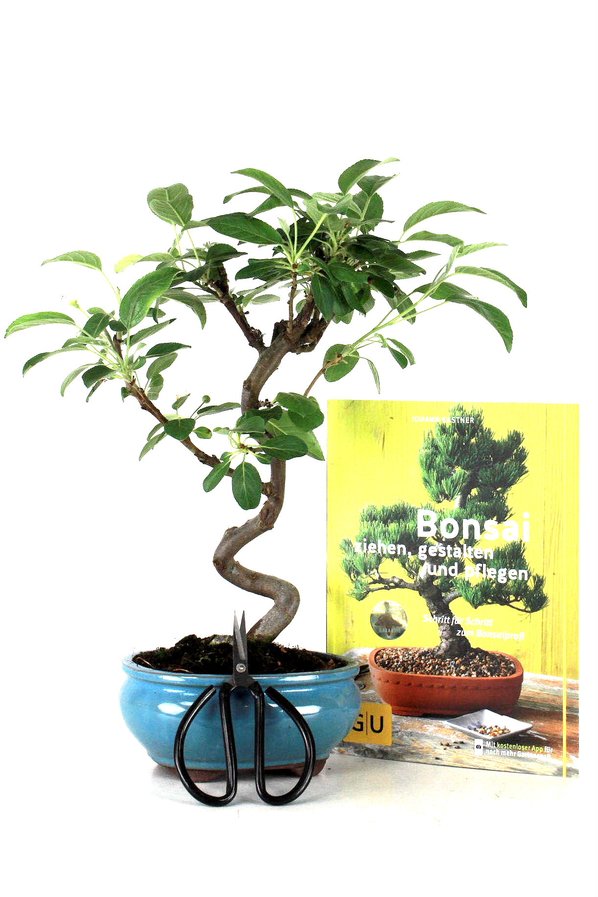 Apfel bonsai spar angebot bei oyaki bonsai kaufen for Bonsai onlineshop