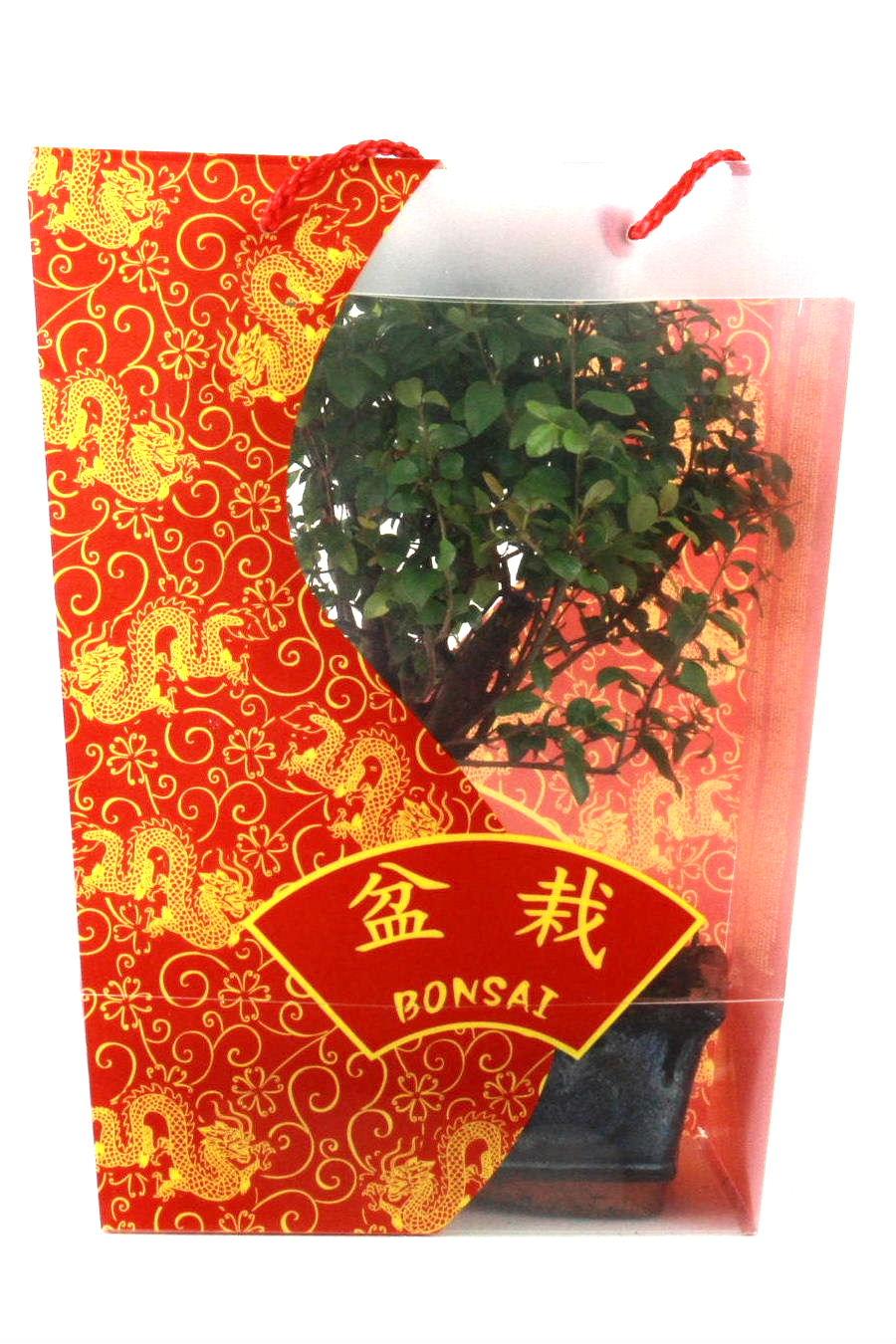 Bonsai bonsaischalen zubeh r oyaki bonsai for Bonsai versand